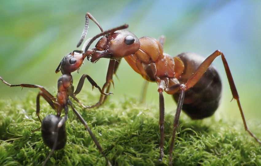 The Law of Killing Ants According to Islam and Its Verses
