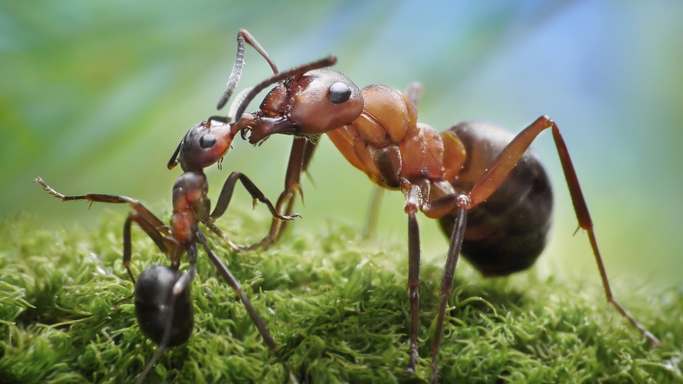 ants in islam